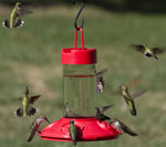 Basic Hummingbird Feeder